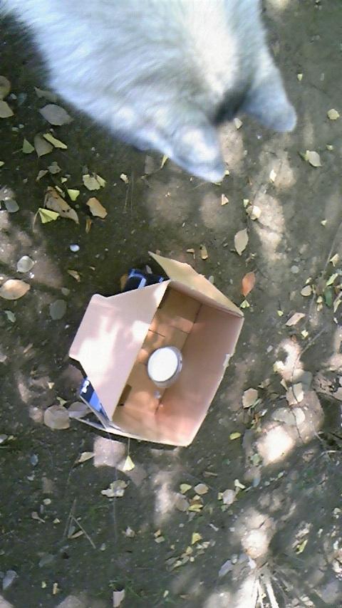 ハリーのお散歩日記〜捨て猫〜